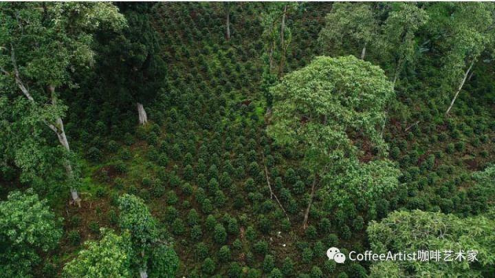 来聊一聊人类与阿拉比卡咖啡起源的故事